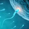人造精子在法国实验室获得成功 遭业内质疑