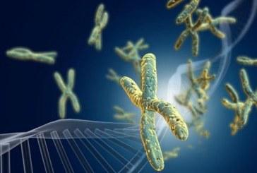 女性基因优于男性 进化中男性会灭绝吗?(视频)