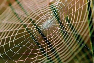 蜘蛛丝被派上大用场 有助搜寻火星生命