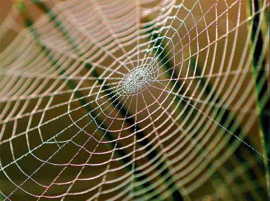 蜘蛛丝有助于搜寻火星生命