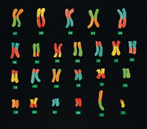 基因编辑:定制完美婴儿应该被禁止吗?