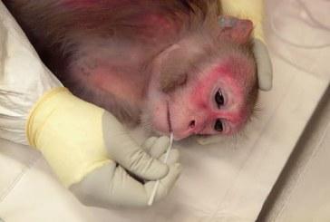 中国科学家成功将3D打印血管植入动物体内