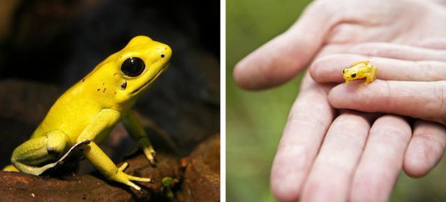 17个稀有而神奇的动物,见过的都说震惊!